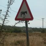 Achtung Wildesel! Halbinsel Karpaz