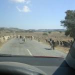 Ziegenherde in Karpaz